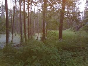 Metsä lauantai-iltana
