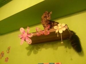 Cat cafe cat2