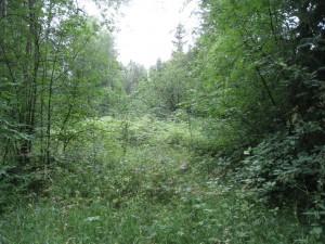 Aukko metsässä kertoo, että tässä on joskus ollut talo.