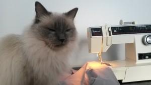 Kuten tavallista, kissa valvoo työskentelyä.