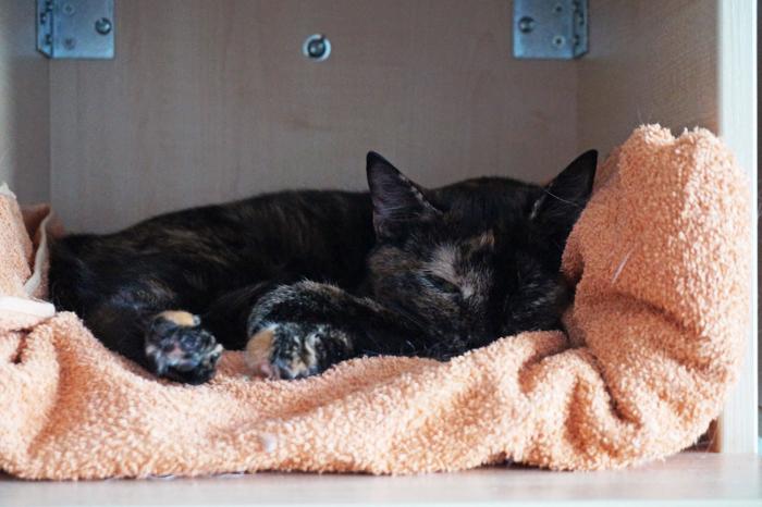 Vapaaehtoistyö kodittomien kissojen parissa