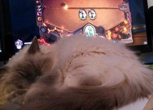 Kissa on yleensä kaverina, kun pelaan. Enemmän tai vähemmän edessä.