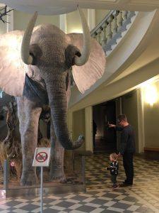 Dinosaurusopastuksia Luonnontieteellisessä museossa syyslomaviikolla