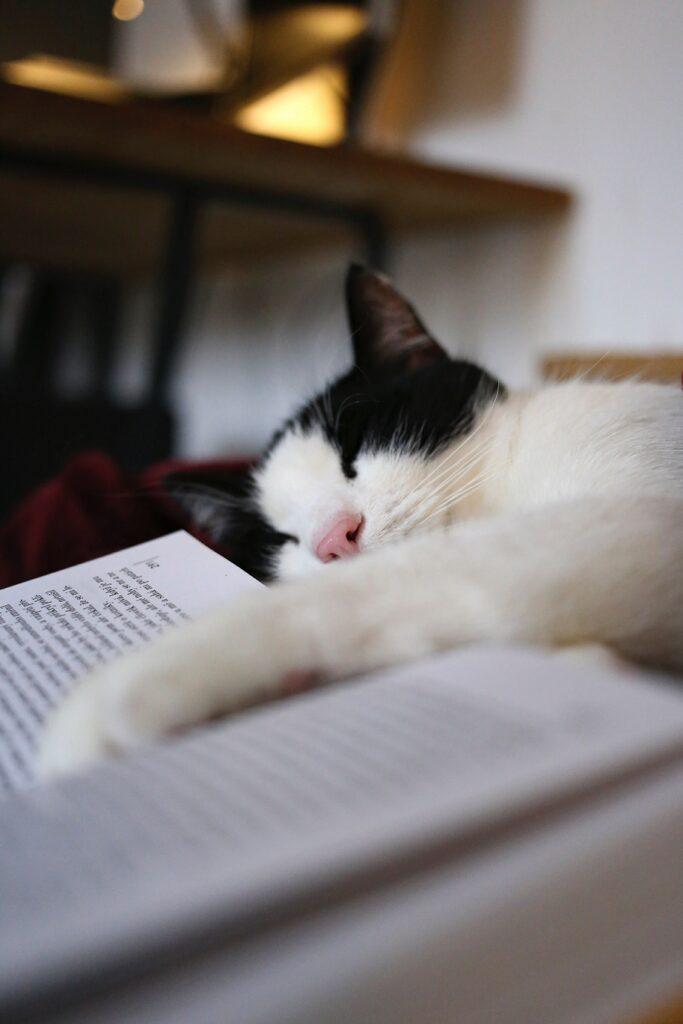 Kuvituskuva nukkuvasta kissasta.