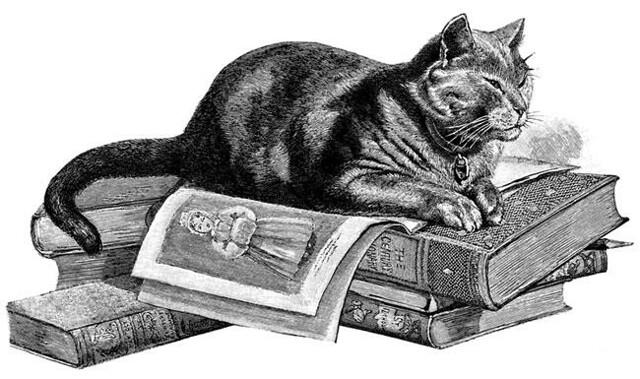 Kuvituskuva kissasta