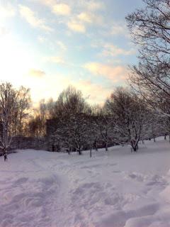 Talvinen maisena